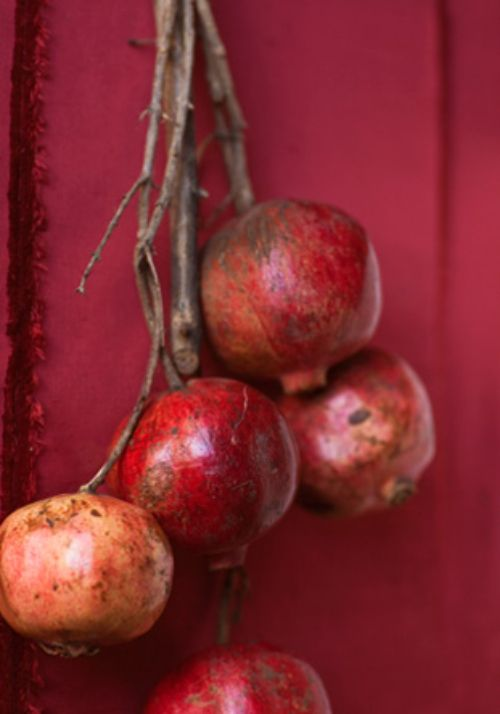 Pomegranate Branch