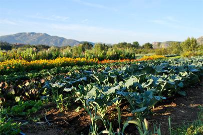 rancho_garden_53137.jpg
