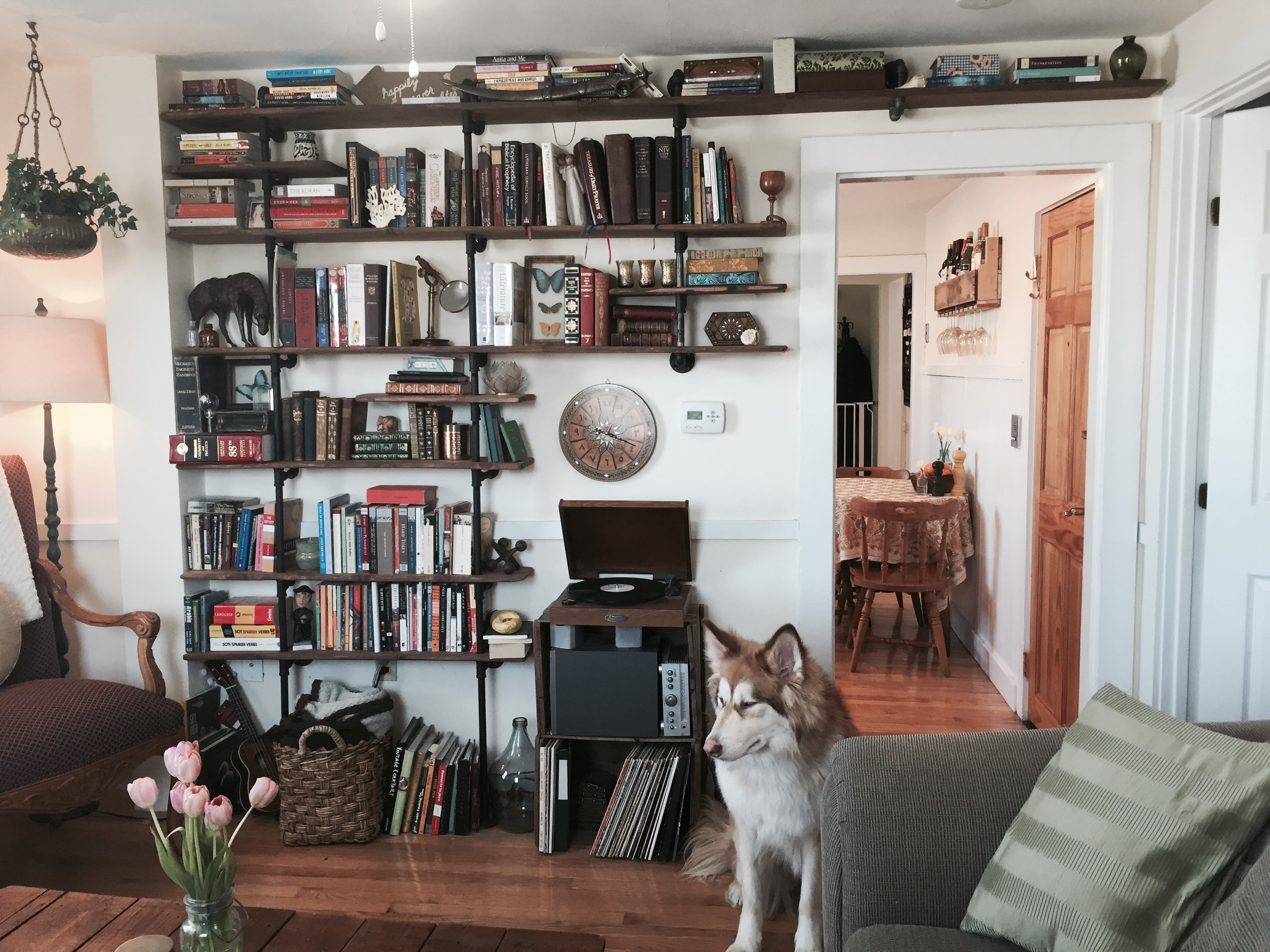 This is my bookshelf.  Guest appearance by my dog.