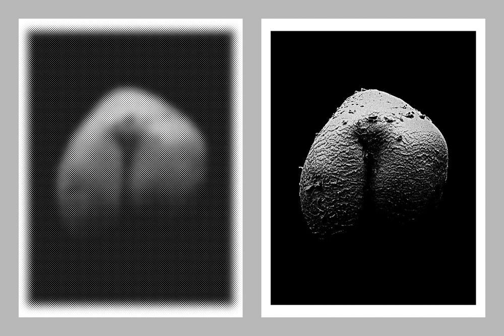 Mushroom2C.jpg