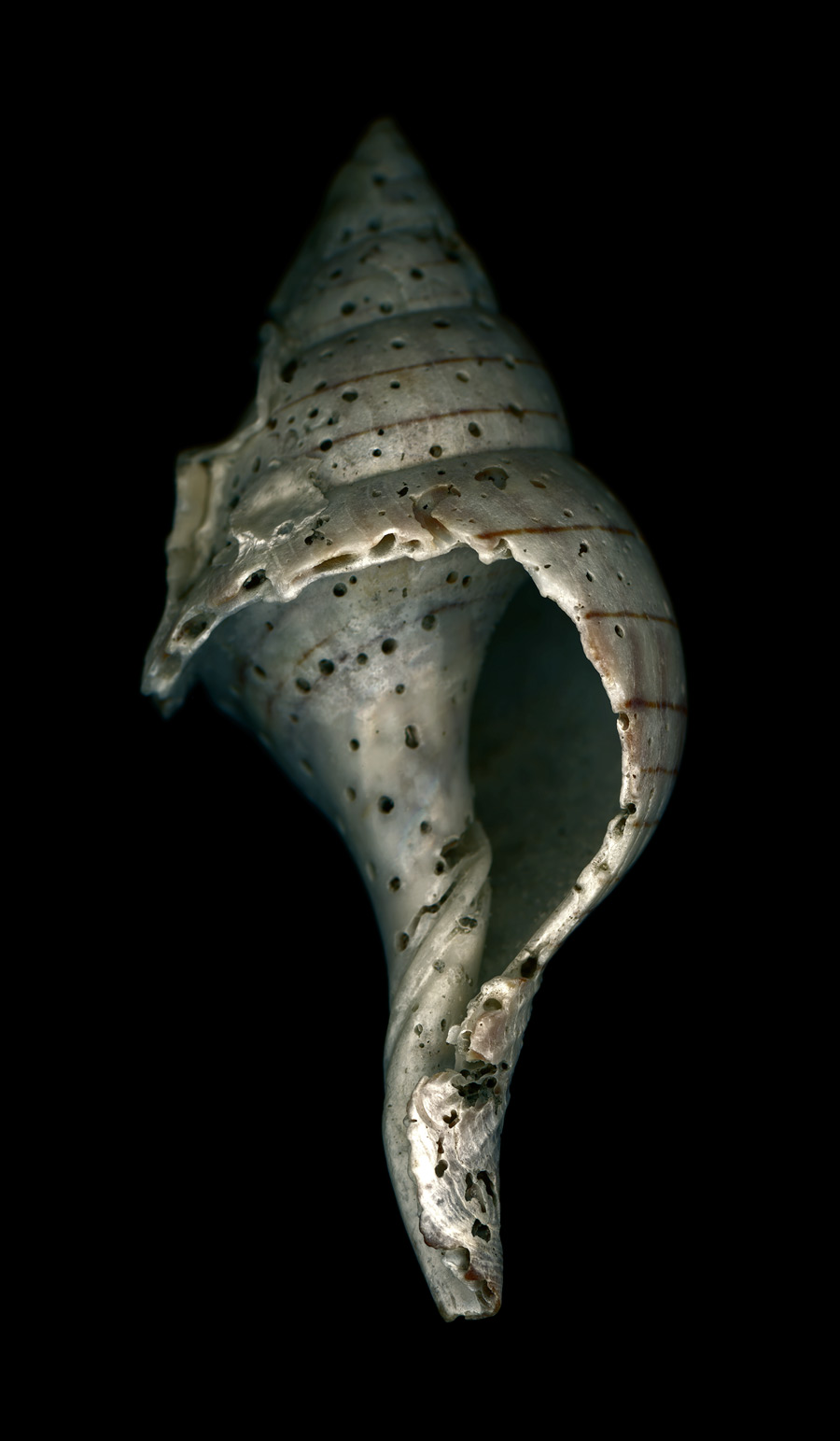 shell014.jpg