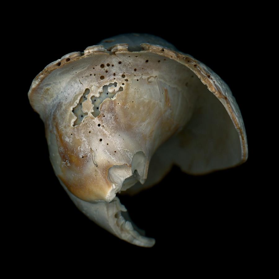 shell026.jpg