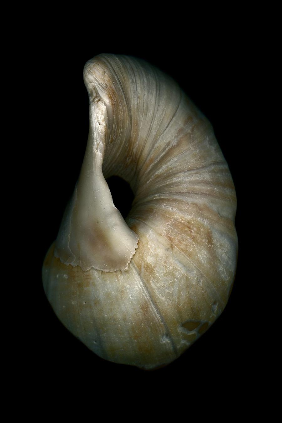 shell032.jpg