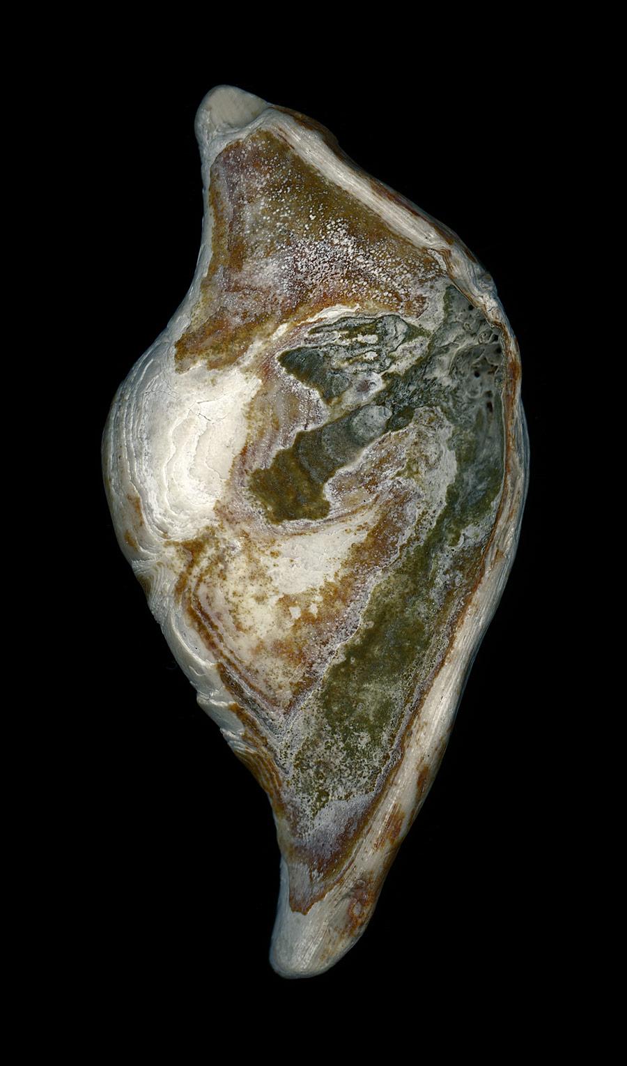 shell034.jpg