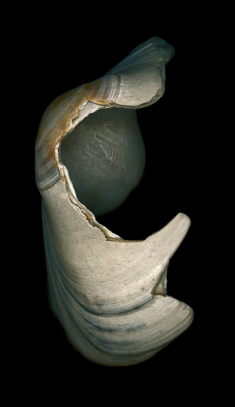 shell033.jpg