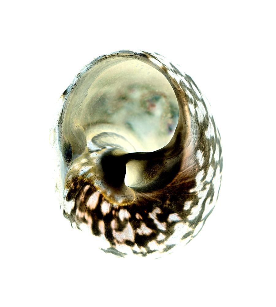 shell046-i.jpg