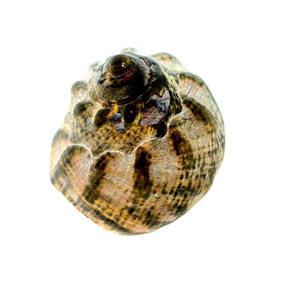 shell049-1.jpg