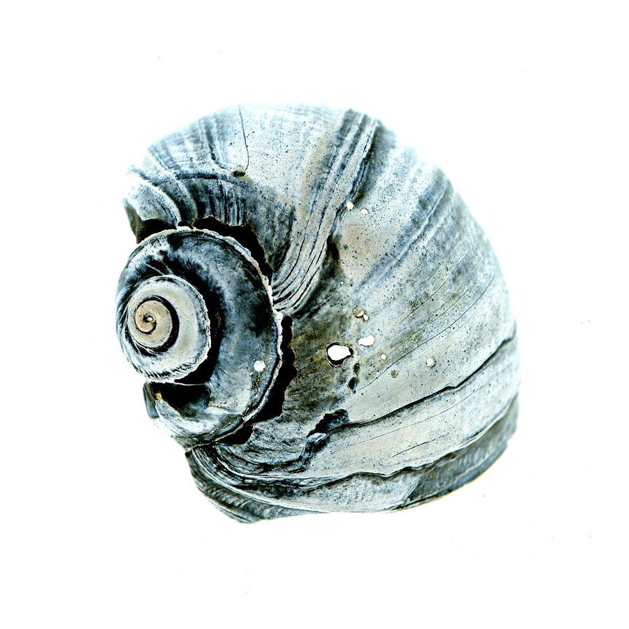 shell029-i.jpg
