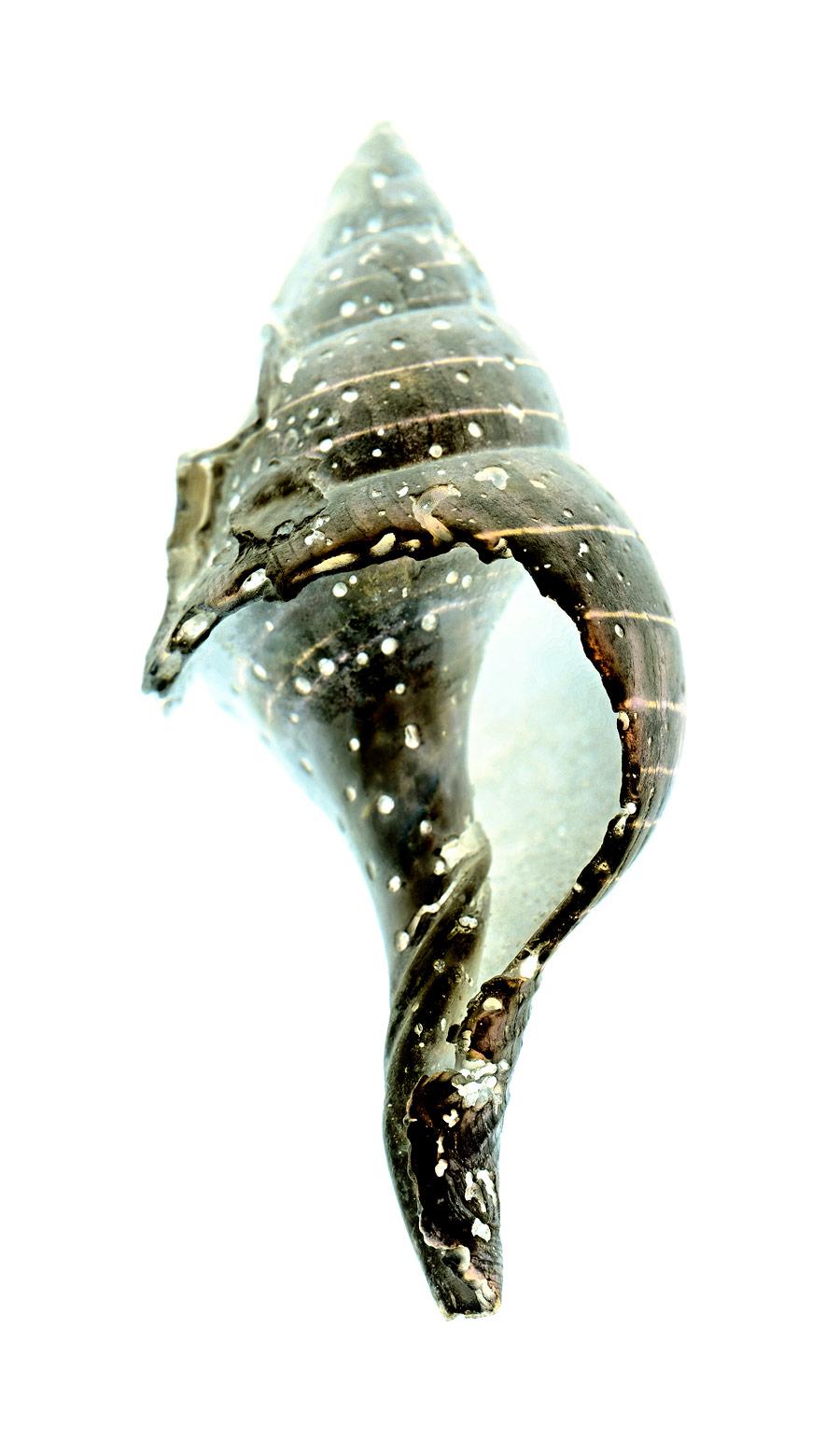 shell014-i.jpg