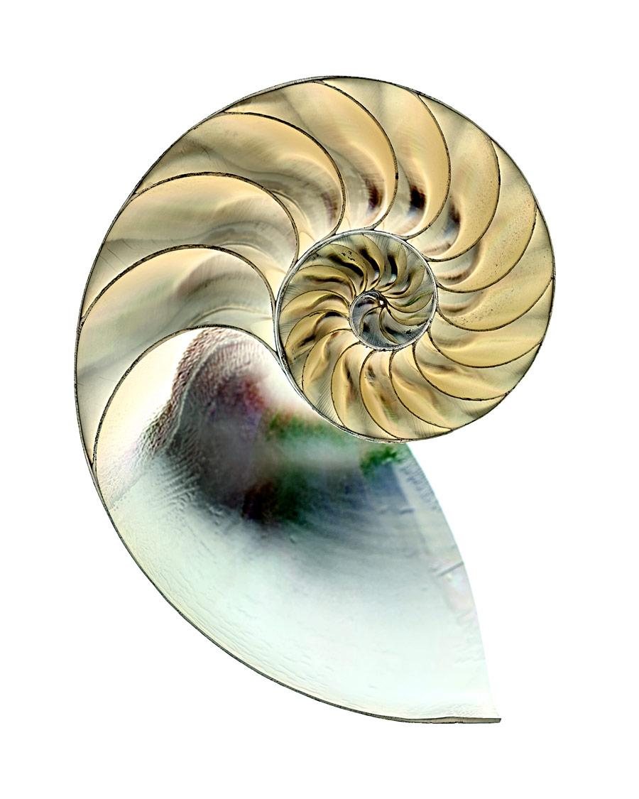 shell063-i.jpg