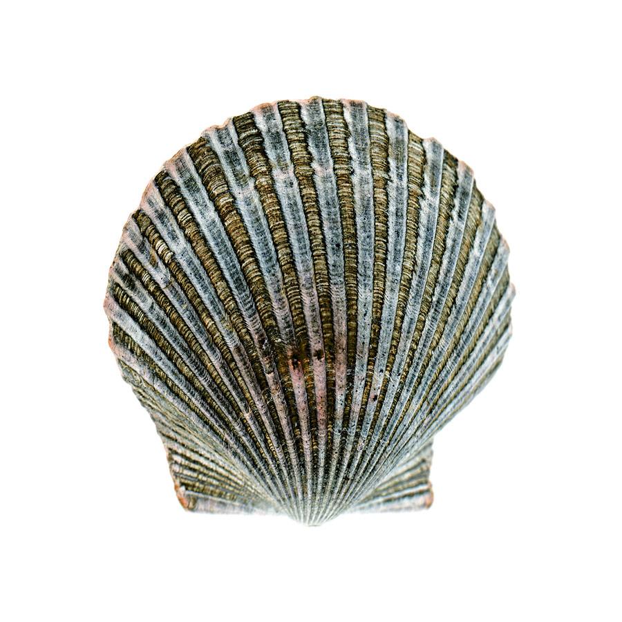 shell006-i.jpg