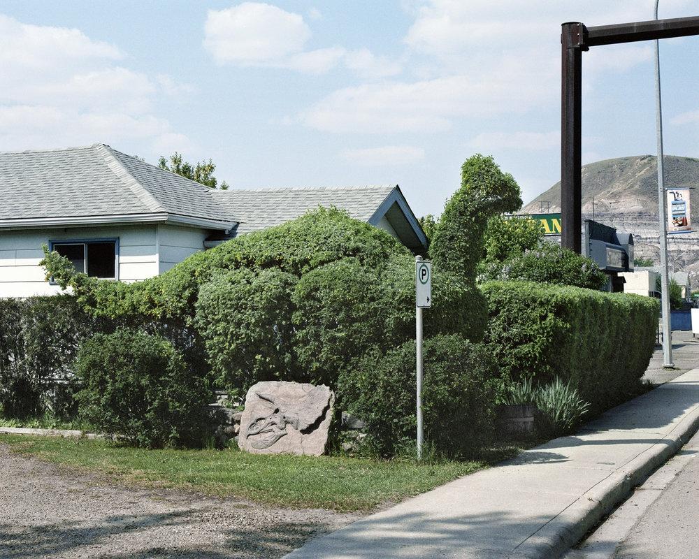Dinosaur Bush