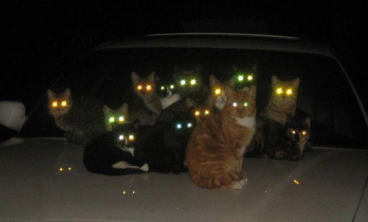 Watch out…we're getting our posse ready! photographyprison: Alien Cats