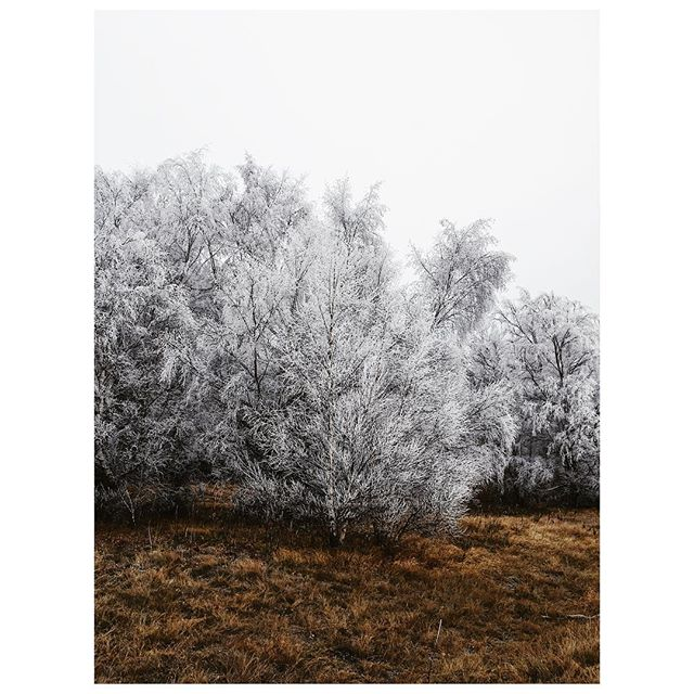 Hoar Frost on the first day of winter. #hoarfrost #newzealand