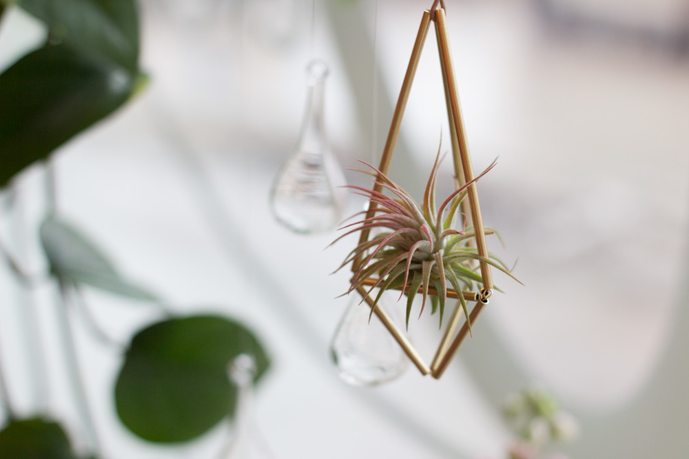 Air plant at Verde Plant Design in Winnipeg, Canada // via thebotanical.ca
