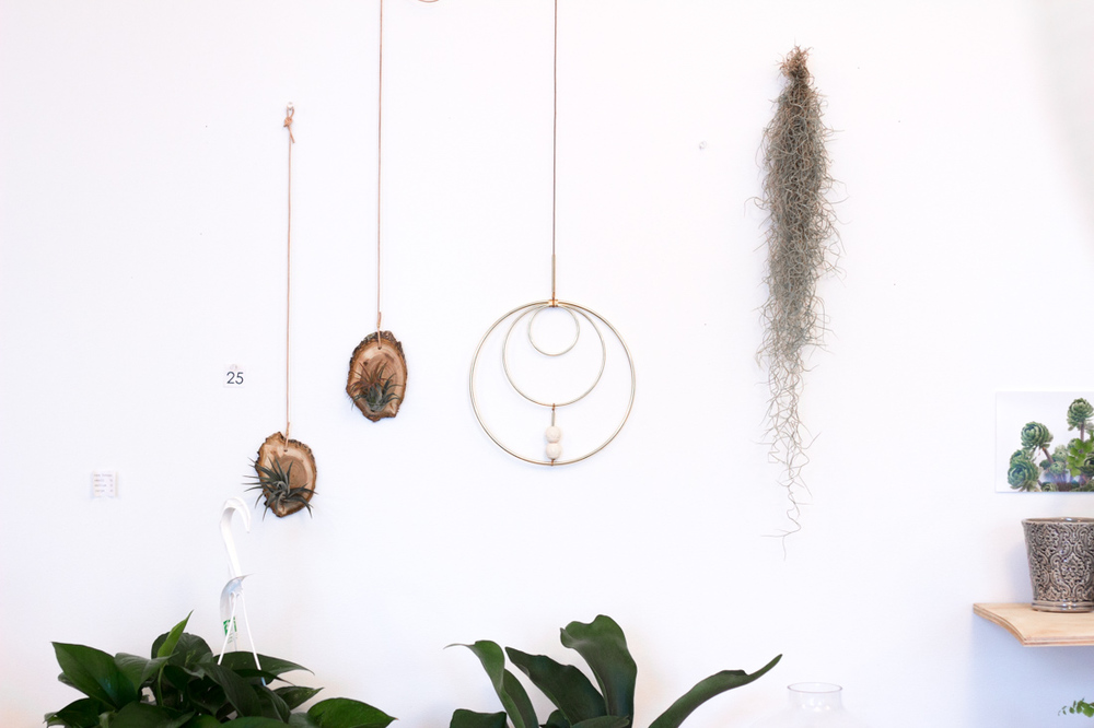 At Verde Plant Design in Winnipeg, Canada // via thebotanical.ca