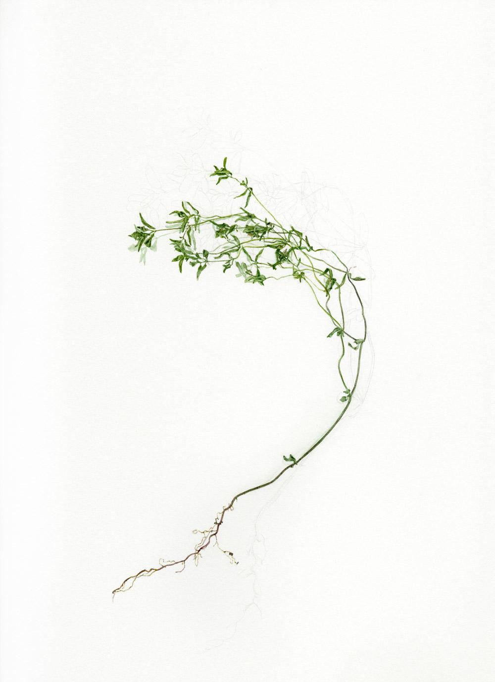 Piece from N 49�5_ W 97�1 by artist Chantal Dupas of Winnipeg, Canada // via www.thebotanical.ca