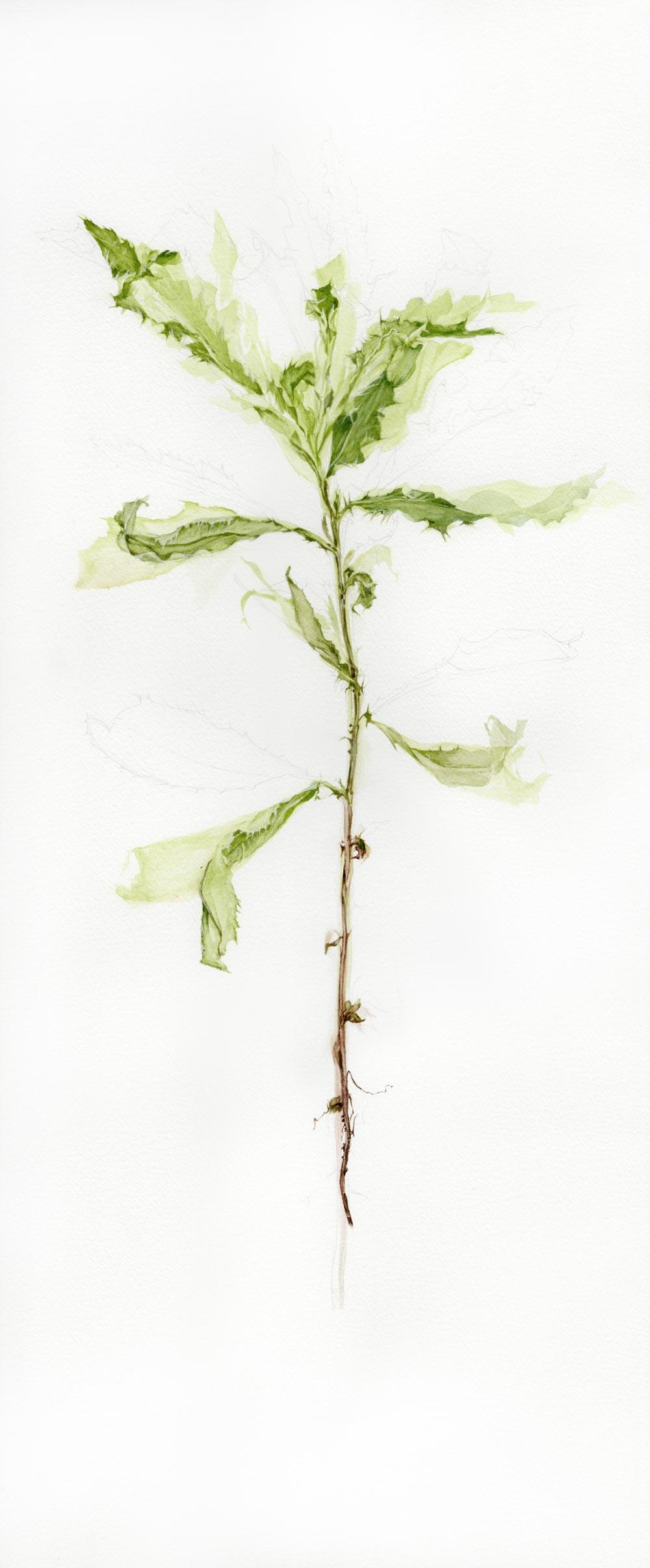 Piece from N 49?5_ W 97?1 by artist Chantal Dupas of Winnipeg, Canada // via www.thebotanical.ca