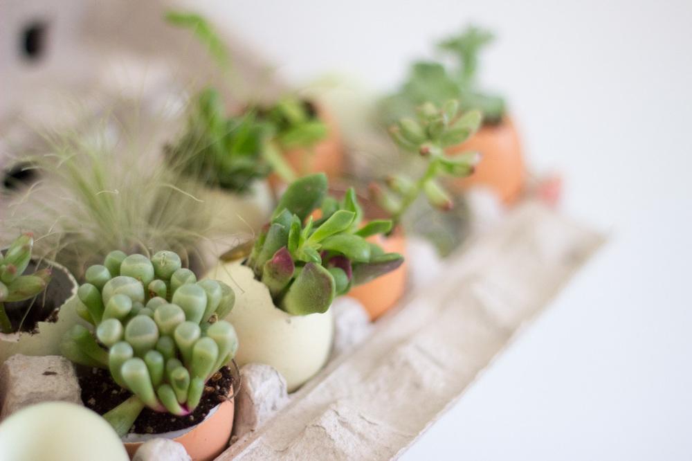 Eggshell succulent garden // via www.thebotanical.ca