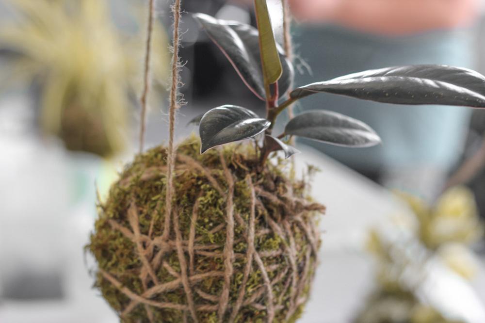 Kokedama // via www.thebotanical.ca