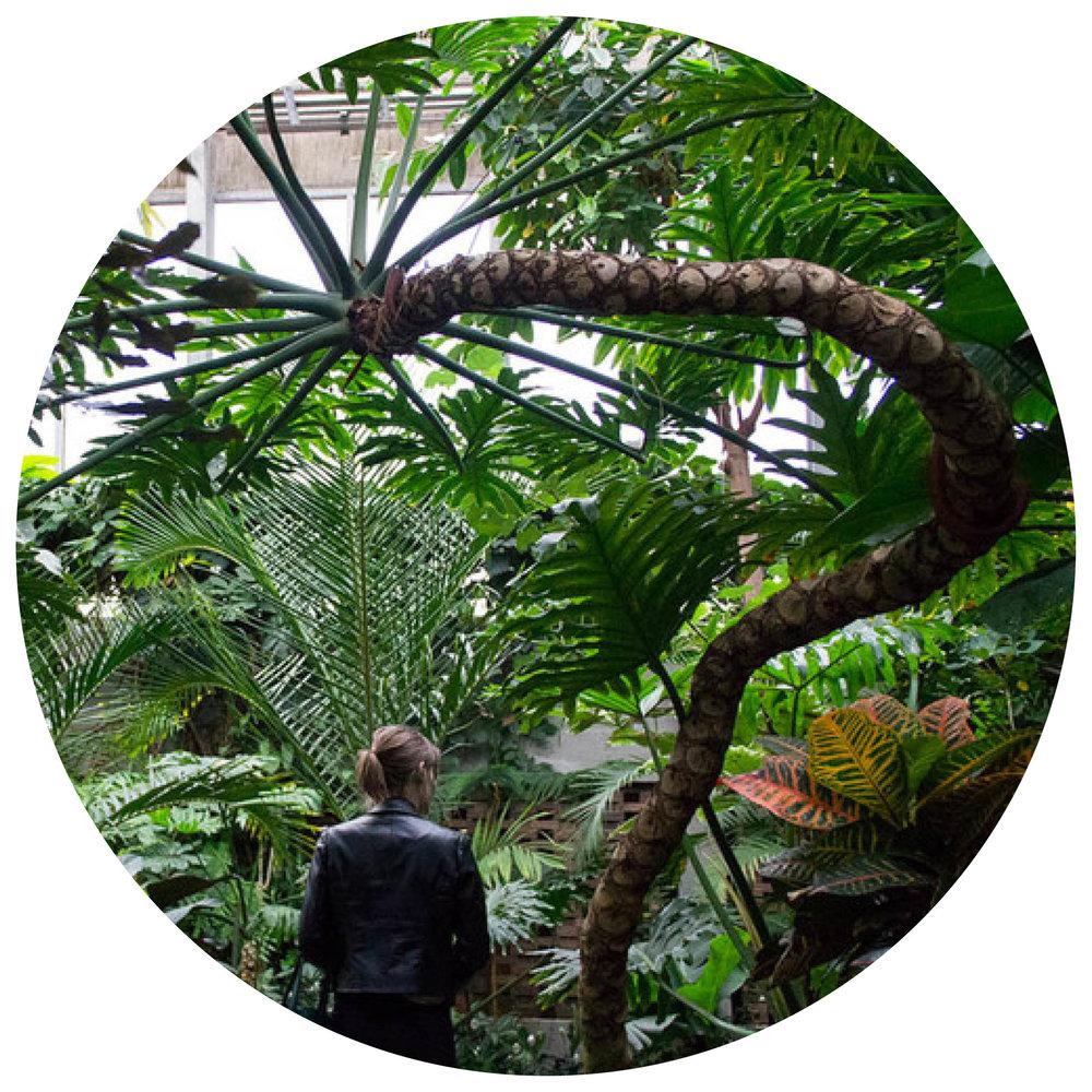 Sarah Carson // thebotanical.ca