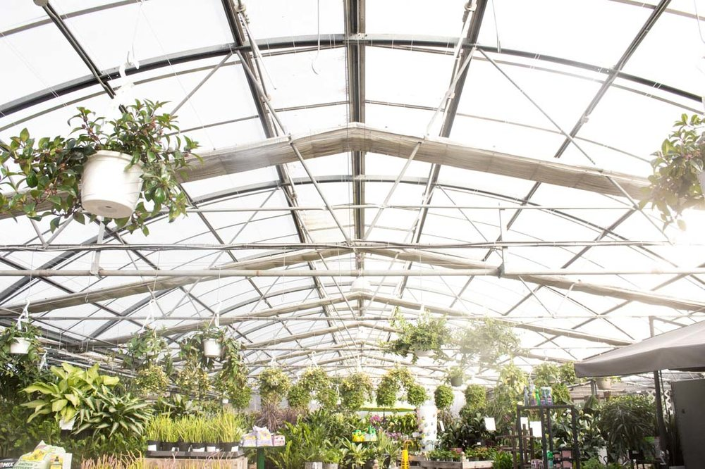 Greenhouse Yoga // via www.thebotanical.ca