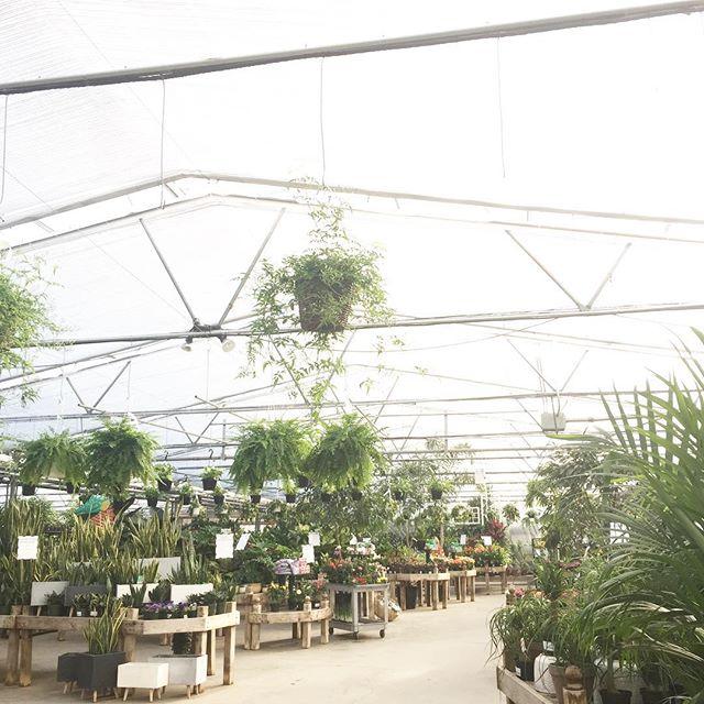 Morning scene. 🌿 #greenhouseyoga #shelmerdinestyle #botanicalyoga