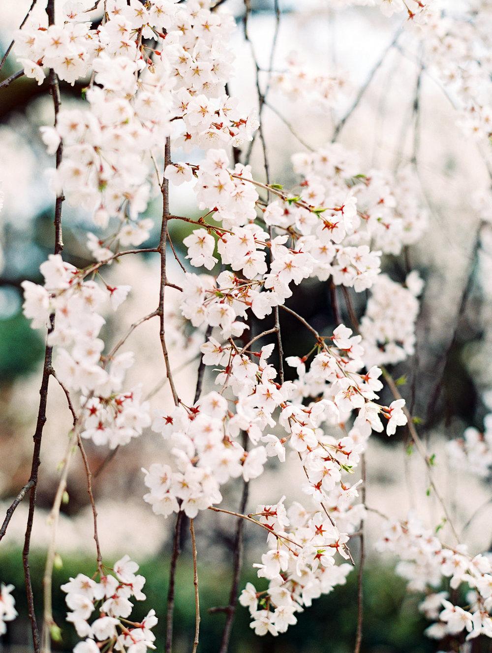 StephanieGanPhotoJapan-148.jpg