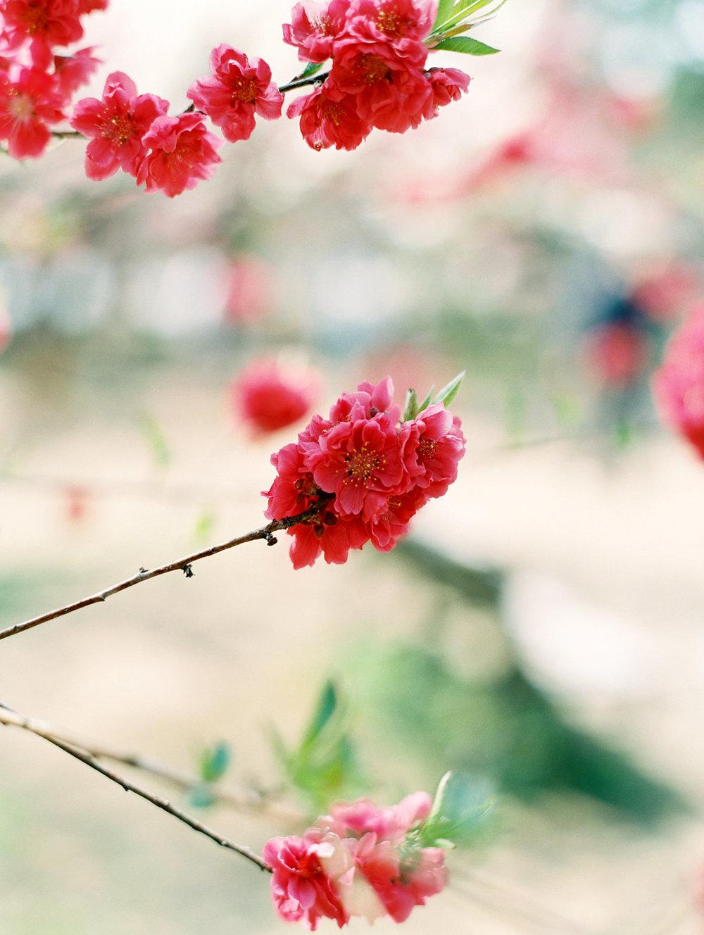 StephanieGanPhotoJapan-150.jpg