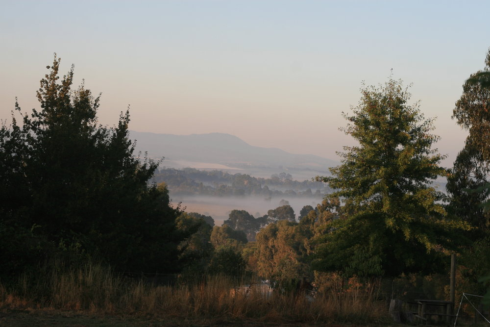 yarra valley morning mist