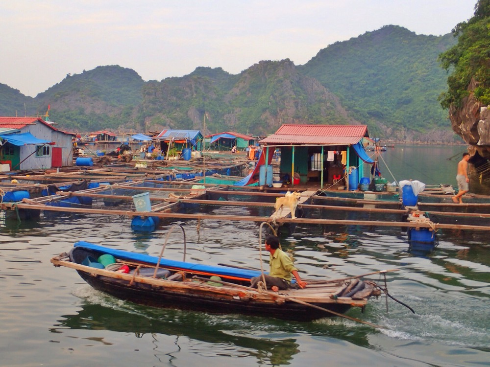 Floating fishing village in Lan Ha Bay