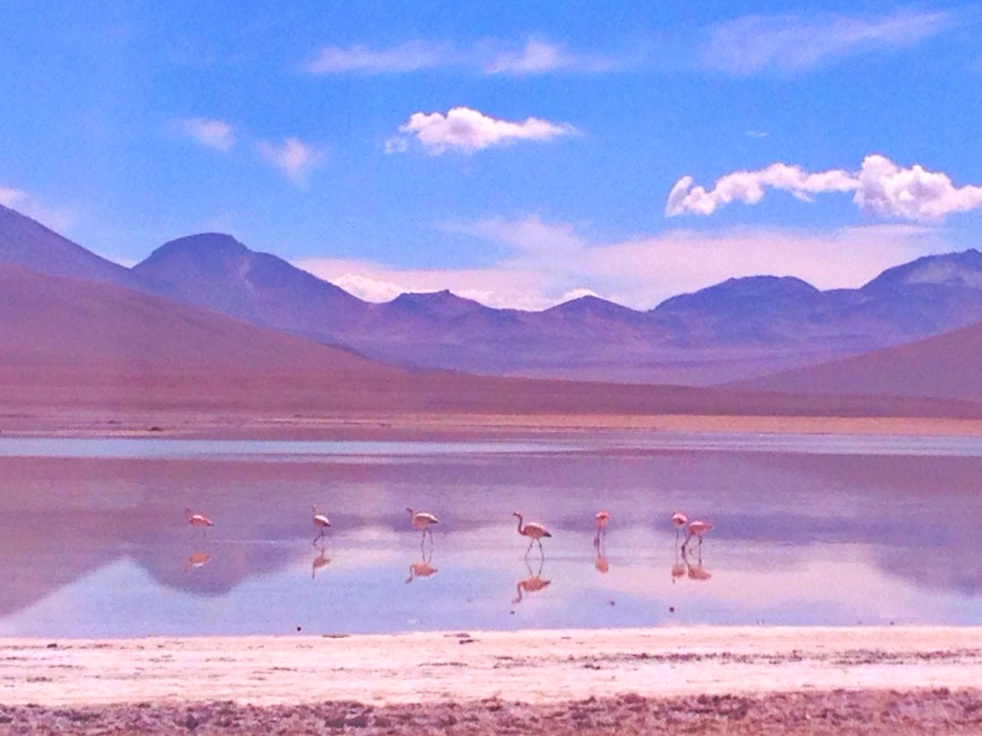 Flamingos on the Laguna Colorada
