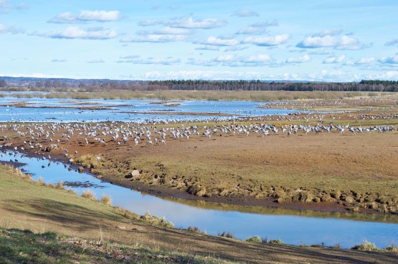 Cranes Lake Hornburga