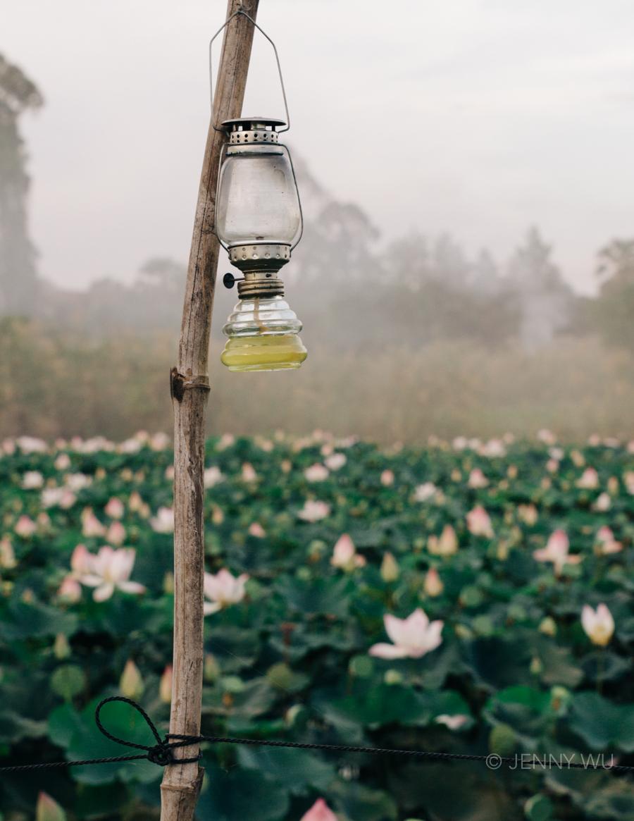 Cambodia Lotus Farm