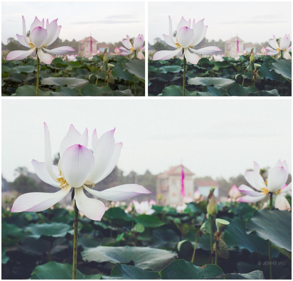 Top left- unedited Jpeg, top right- VSCO Cam app F2 preset, bottom- F2+ Lightroom preset