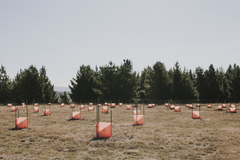 Southern forests in Canberra Arboretum: Canberra photographer