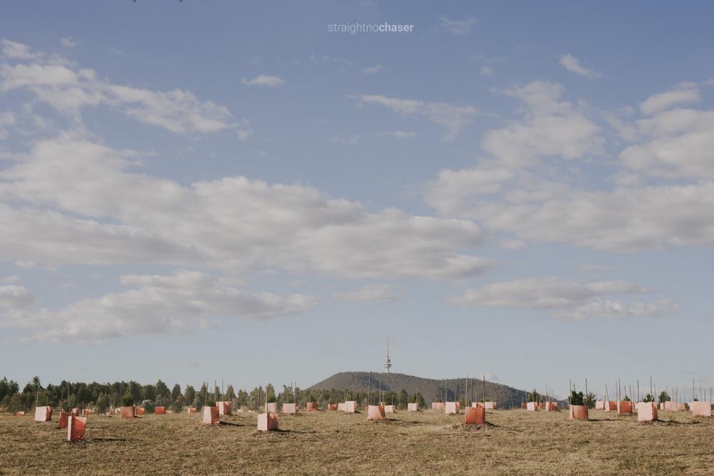"""National Arboretum Canberra: """"Behind Locked Gates"""""""