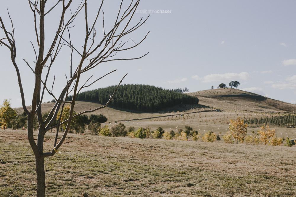 """Canberra Arboretum: """"Behind Unlocked Gates"""""""