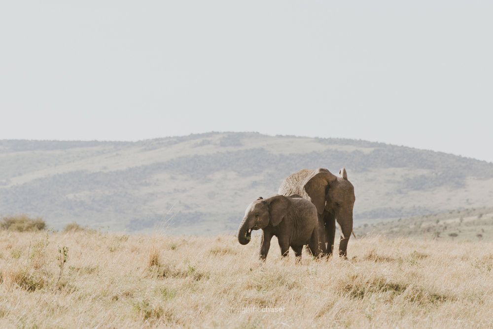 Safari diary part 1: Masai Mara- elephants