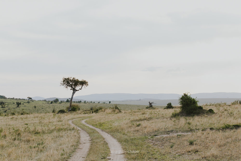 Safari diary part 1: Masai Mara