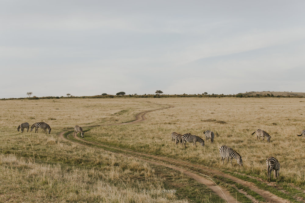 Safari diary part 1: zebras in the Masai Mara