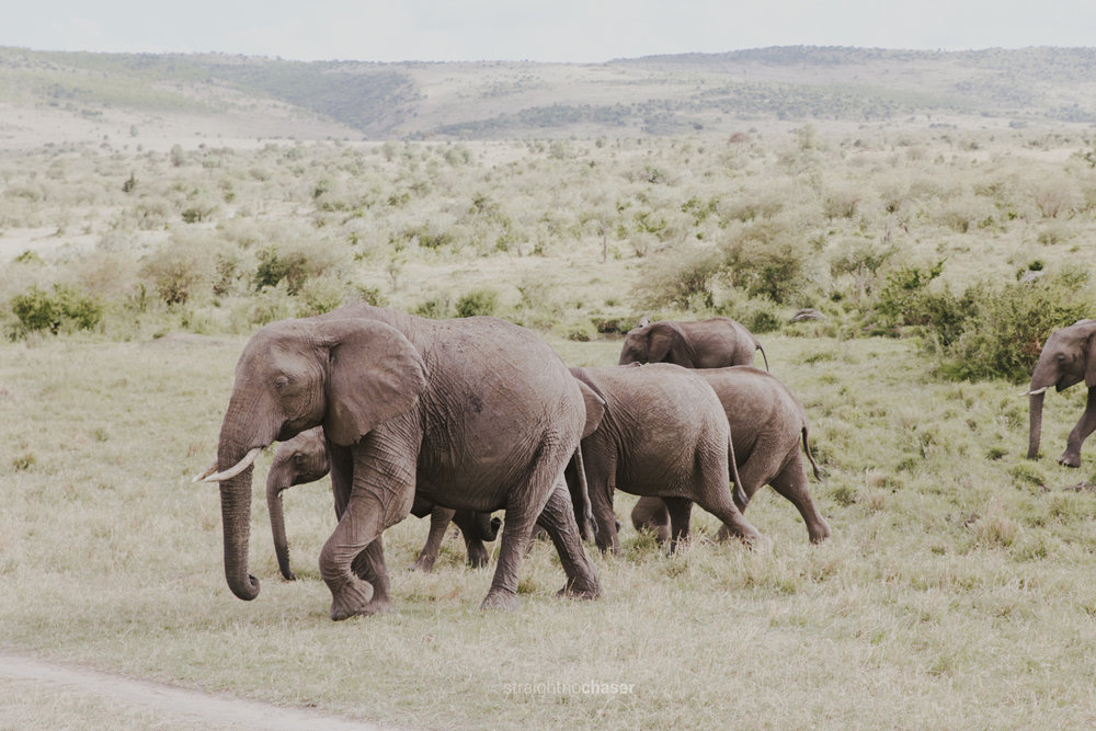 Safari diary part 1: Elephants in the Masai Mara