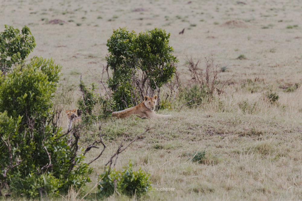 Safari diary part 1: lions in the Masai Mara