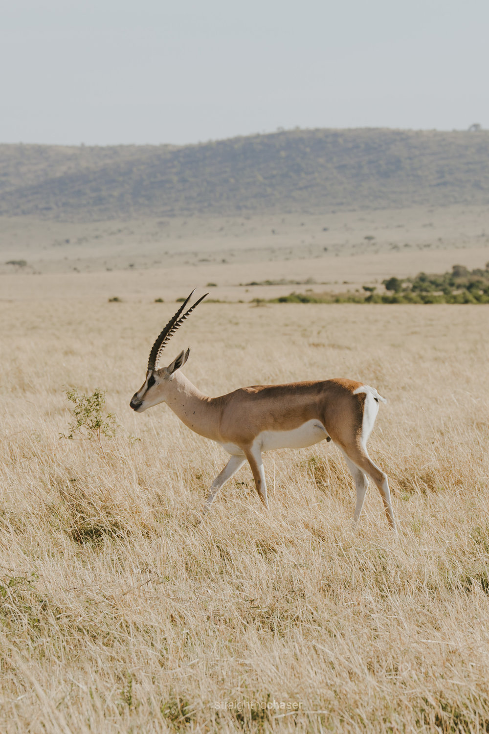 Travel diary part 1: Masai Mara
