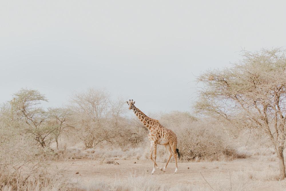 Safari Diary: Amboseli National Park - Photography by Jenny Wu