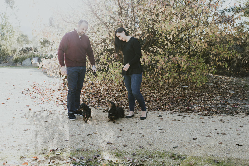 Portraits with dogs: engagement session