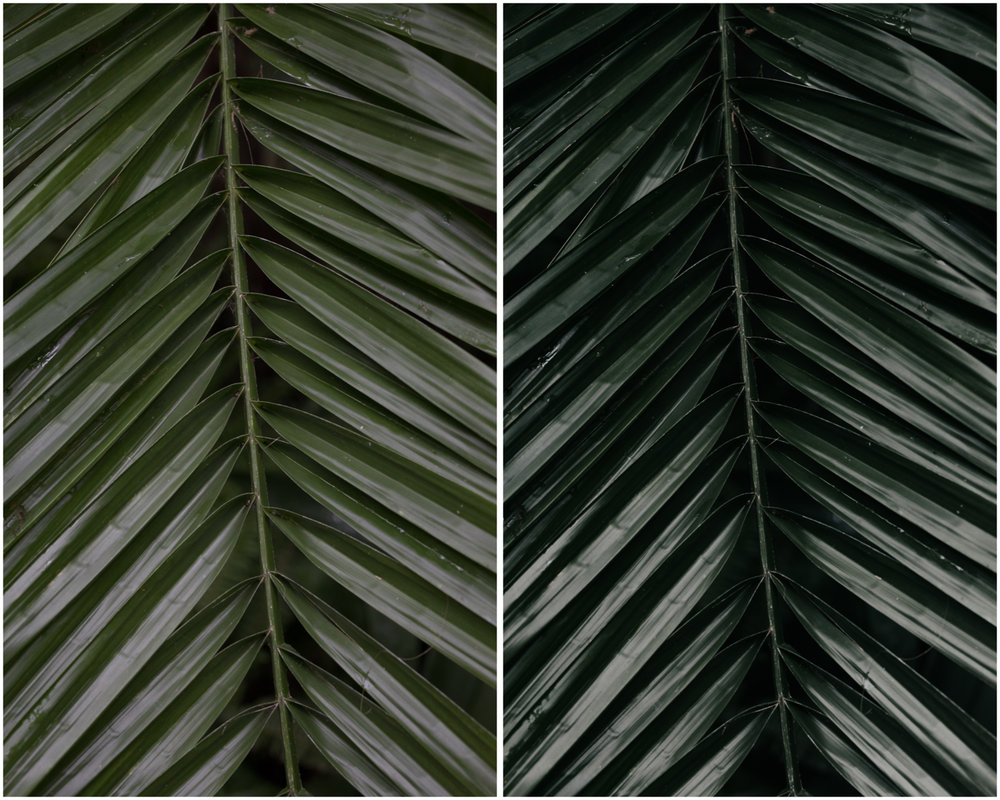 Foliage. Before (left), and with Film Luxe 1 preset applied (right)