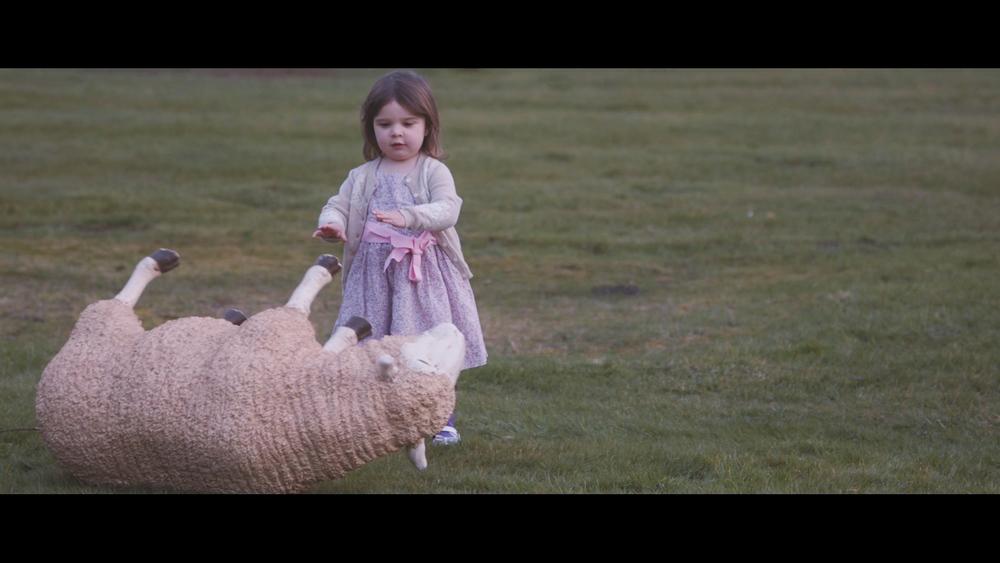 sheep pushing.jpg