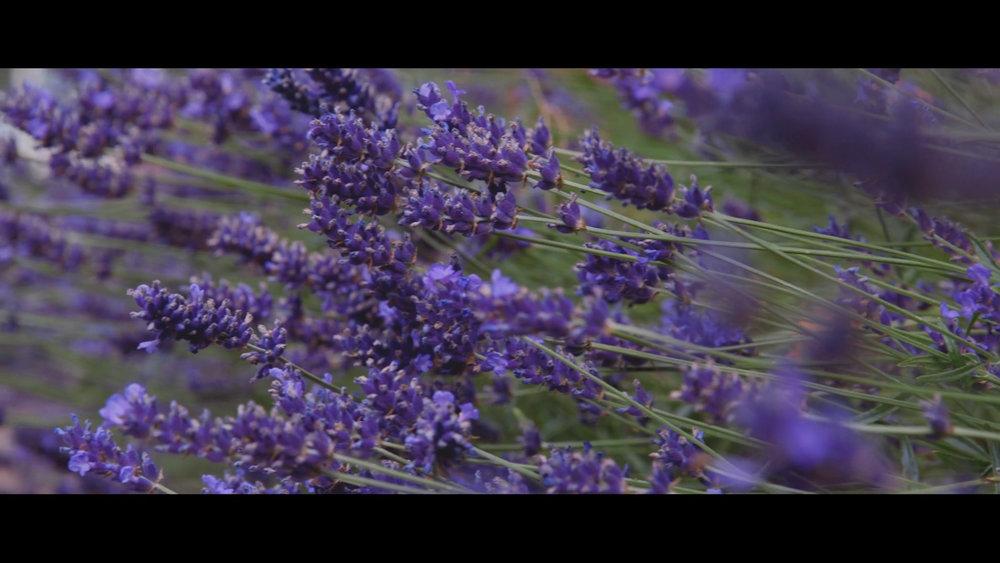 Sequence 02.00_00_29_16.Still003.jpg