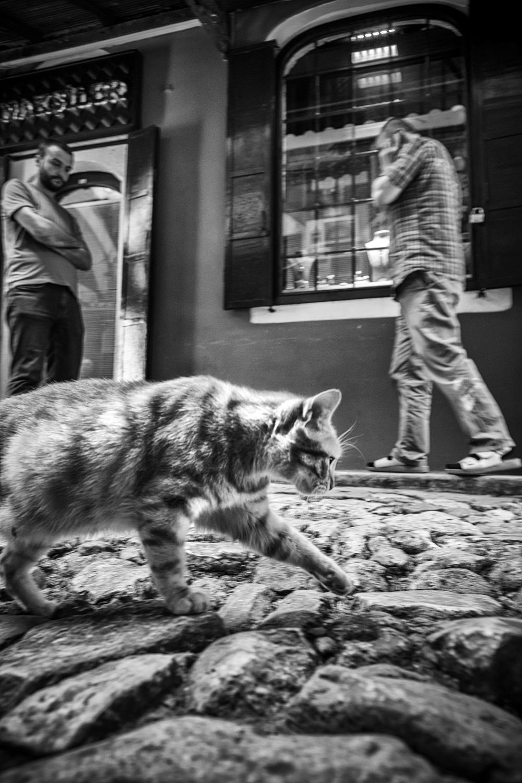 Grand Bazar's Cat.jpg